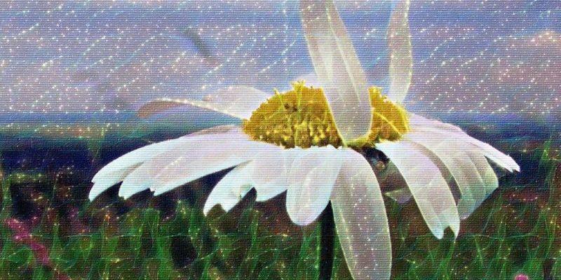 Ромашка - ромен-цвіт