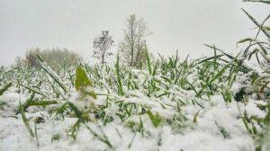 Останній сніг