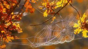 Золоті павучки
