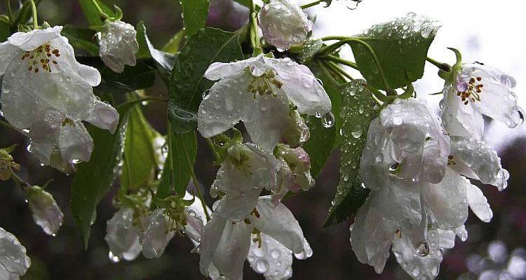 Майський дощ