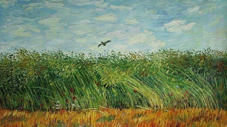 Вінсент ван Гог, Жайворонок на пшеничному полі