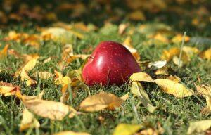 Останнє яблуко