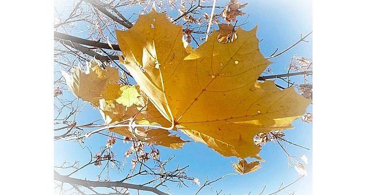 Листя осінь